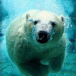 Peek at My Week: Polar Bear Week