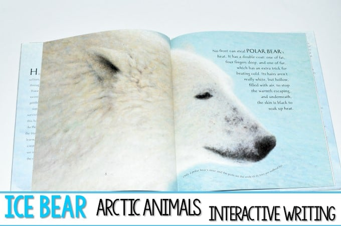 Arctic Animal Interactive Writing in Kindergarten