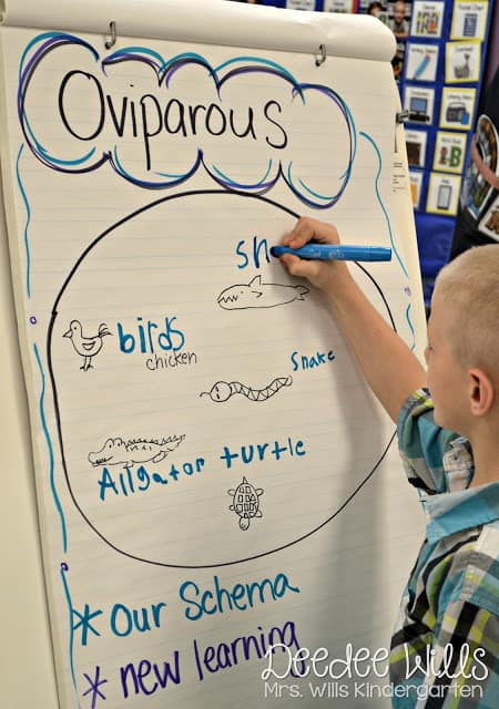 We have always loved learning about oviparous and viviparous animals! I usually cover these lessons around Easter/Spring Break when all these critters are on their minds. These are my favorite oviparous animals lesson plans.