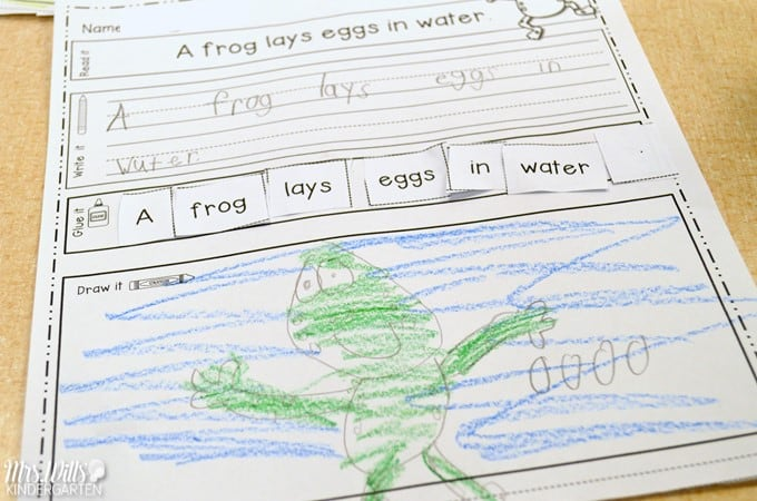 Oviparous animals lesson plans for kindergarten and first grade. Chickens Aren't the Only Ones reading comprehension ideas and activities with a FREE file for your students.