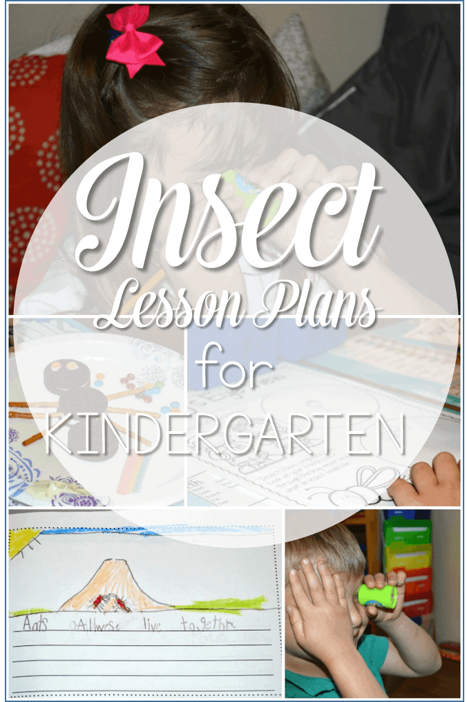 preschool bug lesson plans insect lesson plans for kindergarten 204