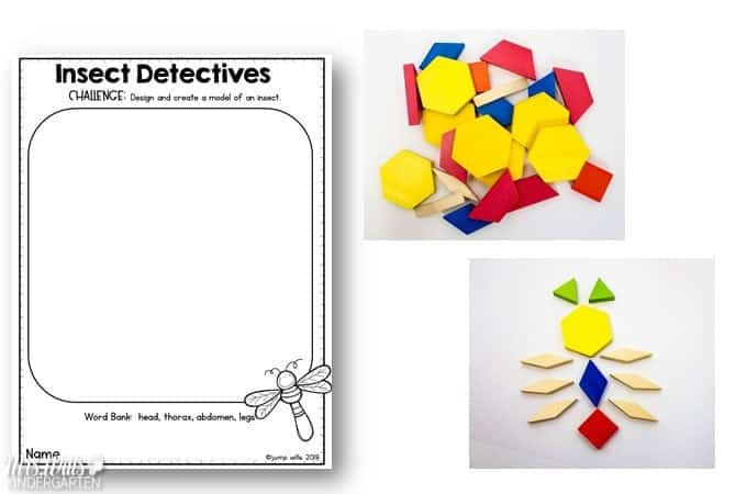 Insect Detective Activities