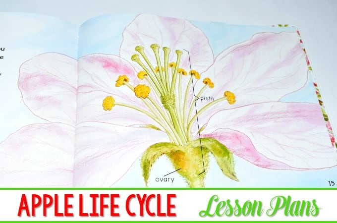 The Life Cycle of Apples Lesson Ideas (FREE file)