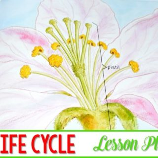 Apple Life Cycles Lesson Plan ideas. Learning about apples in kindergarten is a tradition. This informational book about apples is packed with apple facts. See how we integrate reading, writing, science, and math!