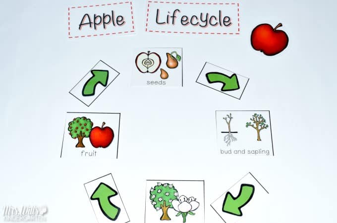photograph relating to Apple Life Cycle Printable referred to as Apple Lifestyle Cycle Lesson Recommendations
