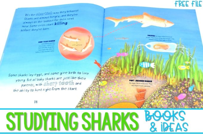 Shark Activities for Kindergarten and First Grade