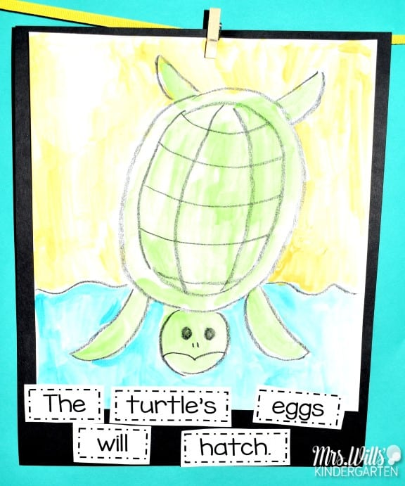Sea turtle lesson plans for kindergarten and first grade! These sea turtle activities and ideas feature the book One Tiny Turtle by Nicola Davies. This informational text and activities study the life cycle of a sea turtle. Writing, center ideas, and art activity too.