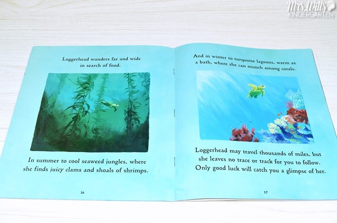 Fun books about summer. Welcome Summer with these great picture books and lesson ideas for kindergarten, first, and second grade!