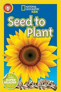 Learning About Plants in Kindergarten and 1st Grade | Plus a Free File! 23