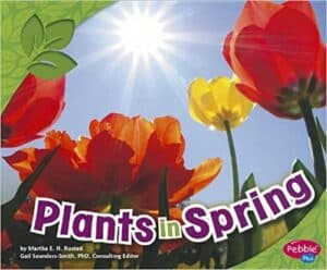 Learning About Plants in Kindergarten and 1st Grade | Plus a Free File! 24